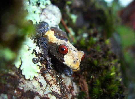bad day   youre   bird poop frog featured