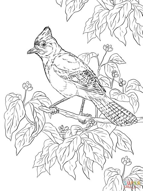realistic bird coloring pages coloring pages