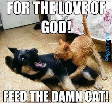 funny meme  cat  dog gapcom