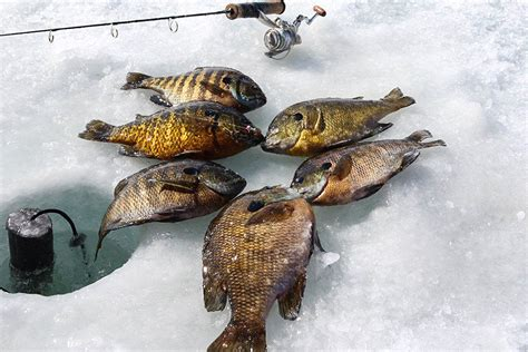 Fishing Calendar 2015 Fish 2015 Fishing Calendar Fish