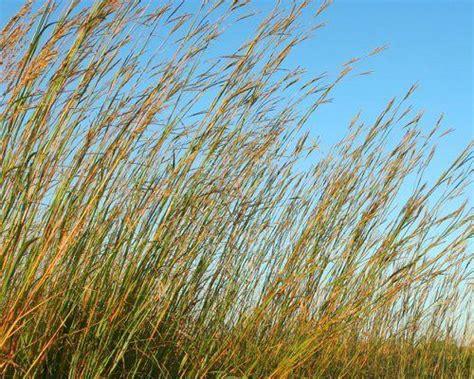 plants in the tropical grassland grassland plants