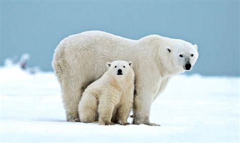 princess cruises polar online the action packed cruises to suit all types daily mail