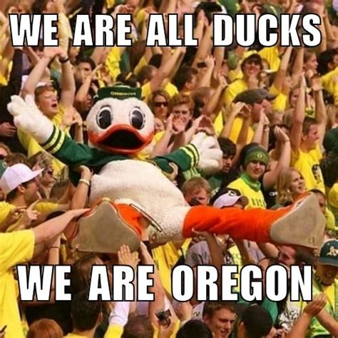 Oregon Ducks Meme - 441 best images about love my ducks on pinterest