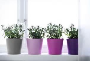 Papaja plant pot pink gray pantone color of the year and pantone