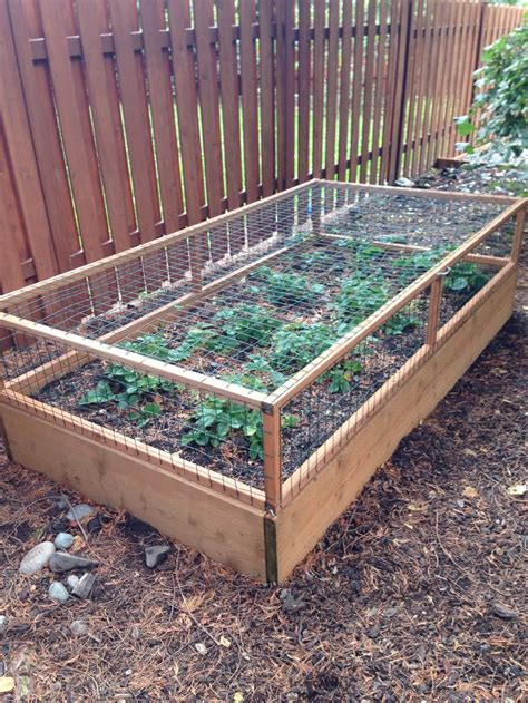 Raised Strawberry Planters by How To Build A Strawberry Cage Diy Projects For Everyone