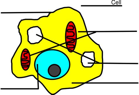 unlabeled cell diagram basic animal cell diagram unlabeled clip at clker