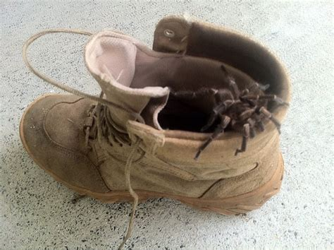 scary spider slippers pictures of spiders and snakes in footwear turning u s