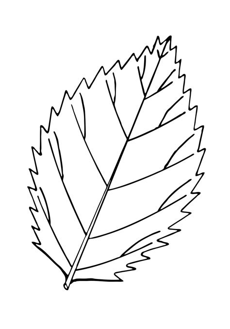 Outline Of A Leaflet by Fall Leaves Coloring Pages Free To Print Fall Best Free Coloring Pages