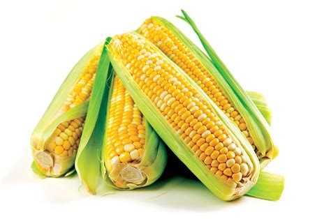 we need to talk about todd a short history of corn via rooty hill