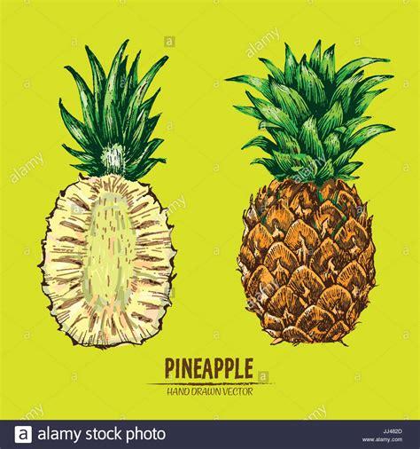 pineapple color digital vector detailed line color pineapple fruit
