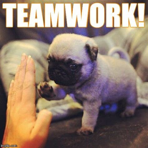 Team Work Meme - funny memes about teamwork google search dogs