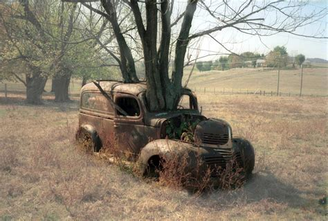 car with tree image drzewa rosnące na ruinach bitwy wykop pl