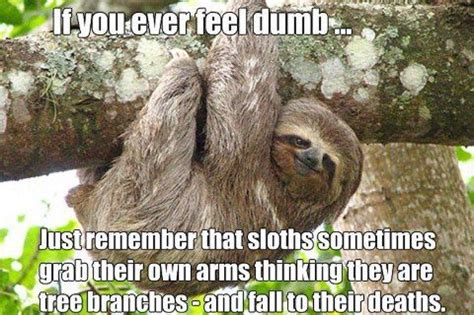Make A Sloth Meme - sloth meme omg thats terrible not sid the sloth pinterest