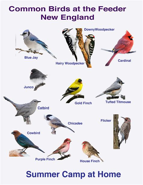 identify birds in virginia