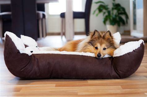 how much do puppies sleep at 6 months the effects of sleeping with your the sleep matters club