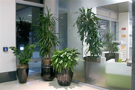 plant for office leasing indoor plants plant friends llc