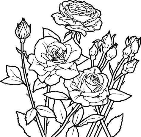 black and white coloring pages of flowers coloring pages of flowers and roses roses coloring page to