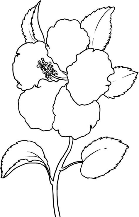 coloring pages flower printable free printable hibiscus coloring pages for kids