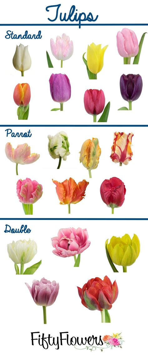 what color are tulips fiftyflowers offers a wide variety of types and colors