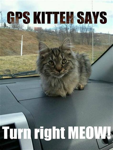 Cat Meow Meme - hehe right meow cute kitties pinterest cats cat