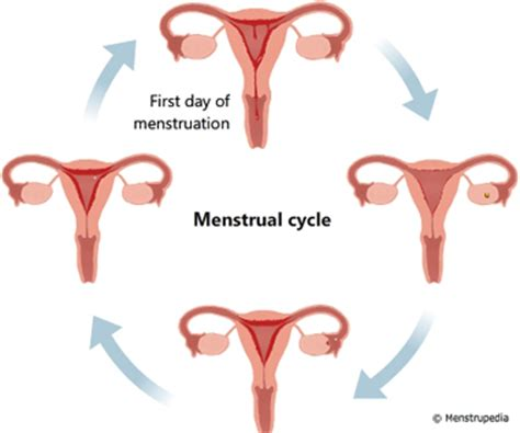 Is It Safe To Detox During Menstruation by Menstruation Images Usseek
