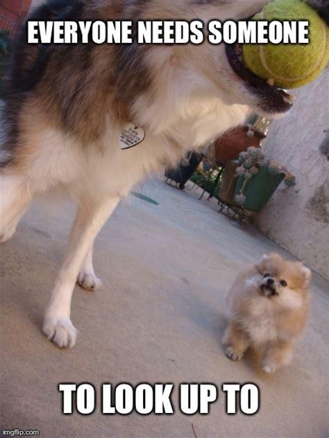 Pomeranian Meme - https www facebook com snoop pomeranian pomeranian