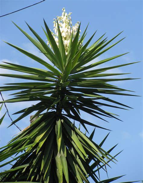 Con huevos yucca flower with eggs el salvador from the inside