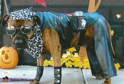 hot biker dude costume  dogs diy costumes