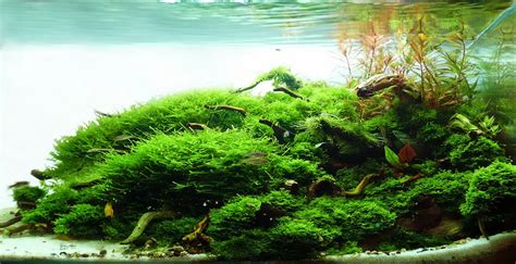 Tank Aquascape by Manage Your Freshwater Aquarium Tropical Fishes And
