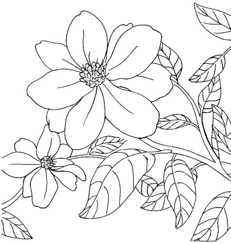 coloring pages of apple blossoms arkansas state flower apple blossom arkansas state