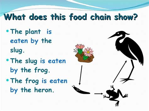 what is in food 6yr 09 12 food chains