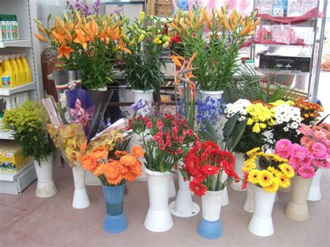 fiori recisi piante e fiori casette tettoie pergole in legno box