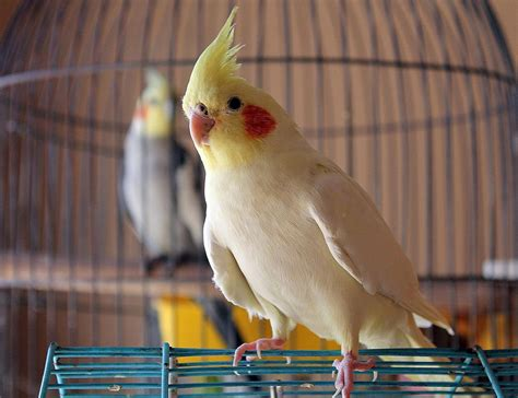 top 5 friendly bird species that make great pets