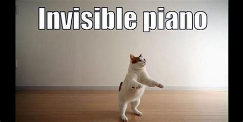 Invisible Cat Meme - invisible cat memes all together dogs pinterest