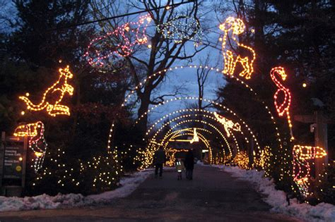 bronx zoo lights what to do for and new year s in new york