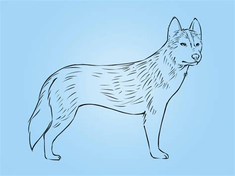 how to a husky easy husky drawing