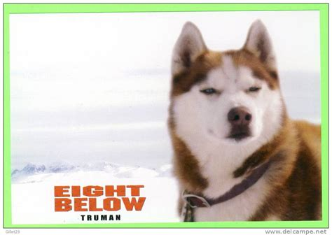 eight below names eight below dogs names driverlayer search engine