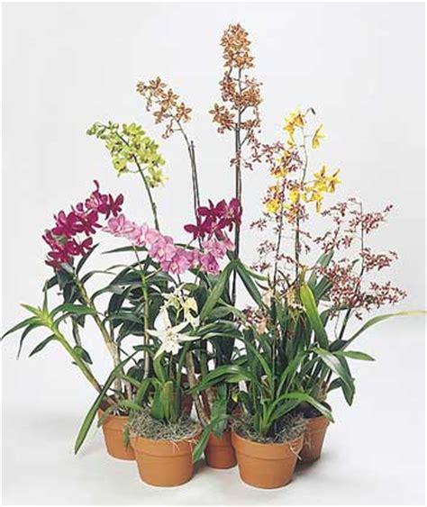 flowering house plants tips for longer lasting flowering houseplants
