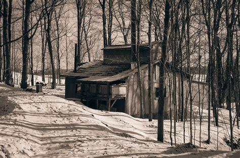 images gratuites arbre la nature foret neige hiver