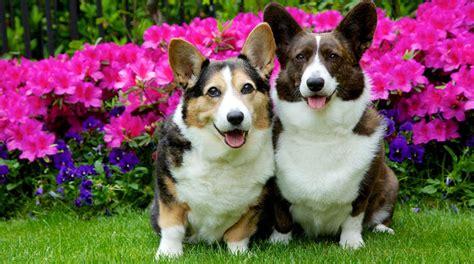 intelligence   life hidden pet dangers