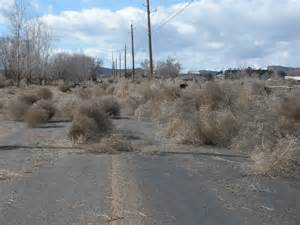 Tumbleweed 1000 Images About Tumbleweeds And Sandstorms On Pinterest