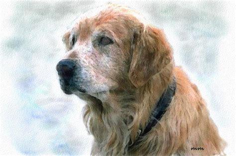 dogs are loyal pin loyal on
