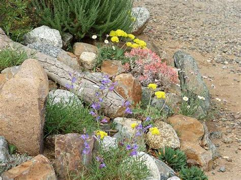 Rock Garden Nursery Plant Nurseries In Orange County Ca