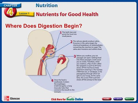 protein digestion begins in the essential questions how does knowing about the digestive