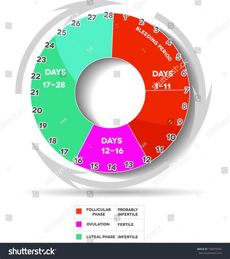 Menstrual Cycle And Ovulation Calendar Menstrual Cycle Calendar Average Menstrual Cycle Stock