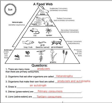 Food Chain Worksheet by Food Chains And Food Webs Worksheets For Third Grade