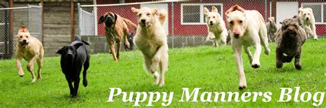 puppy manners tom cruise magic feature 187 puppy manners