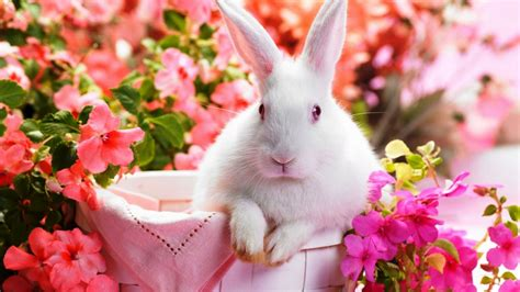 cute rabbit hd wallpaper cute rabbit wallpaper hd 2018 cute screensavers