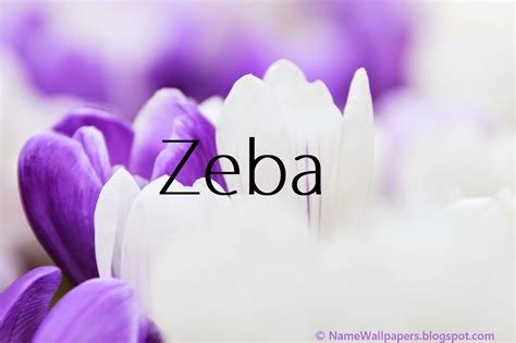 Zeba Name Wallpaper zeba name wallpaper gallery