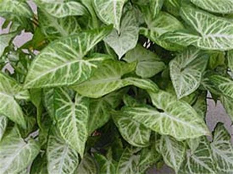 houseplant needs houseplants university of illinois